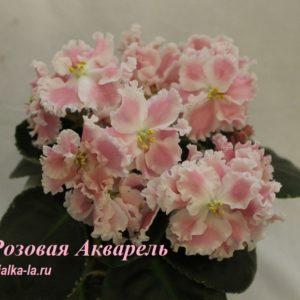 Розовая  Акварель (Морев К.)