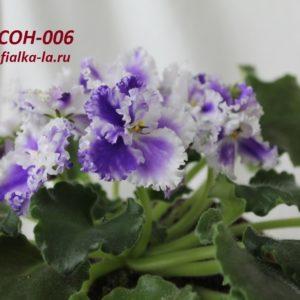 СОН-006 (О.Семикина)