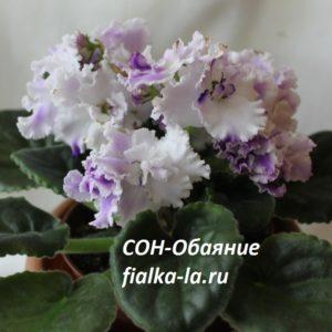 СОН-Обаяние (О.Семикина)