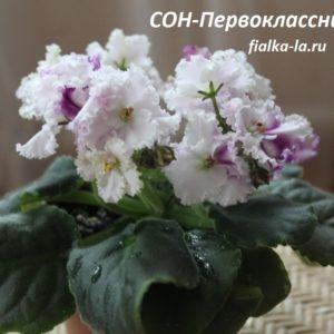 СОН-Первоклассница (О.Семикина)