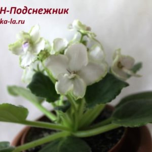 СОН-Подснежник (О.Семикина)