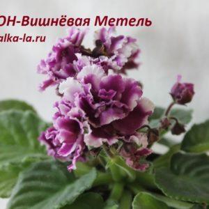 СОН-Вишнёвая Метель (О.Семикина)