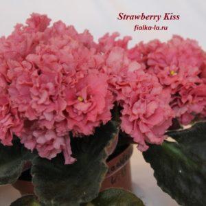 Strawberry Kiss (Sorano)