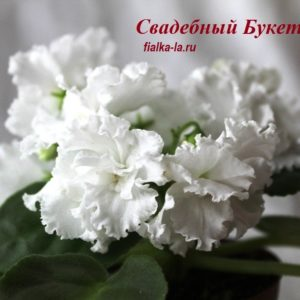 Свадебный Букет (Морев К.)