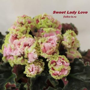 Sweet Lady Love (LLG)