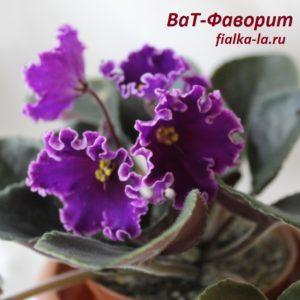 ВаТ-Фаворит (Валькова Т.)