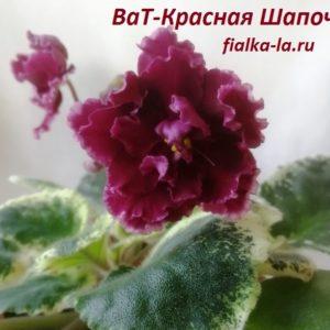 ВаТ-Красная Шапочка (Валькова Т.)