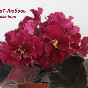 ВаТ-Любовь (Валькова Т.)