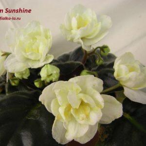 Warm Sunshine (Sorano)