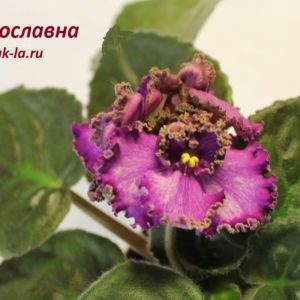 Ярославна (Дадоян)