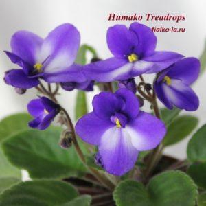 Humako Treadrops