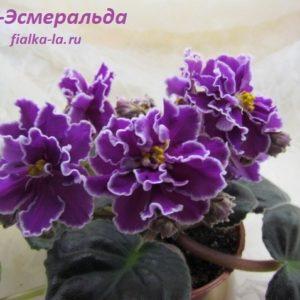 РС-Эсмеральда (Репкина С.)