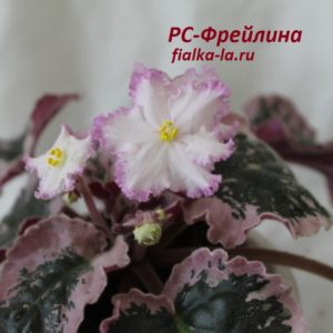 РС-Фрейлина (Репкина С.)