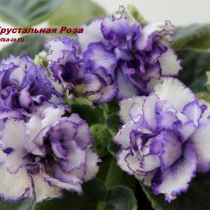 РС-Хрустальная Роза (Репкина С.)