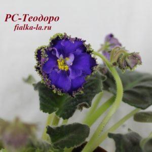 РС-Теодоро (Репкина С.)
