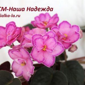 СМ-Наша Надежда (Сеянец Морева К.)