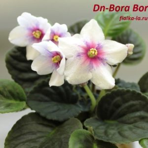 Dn-Bora Bora