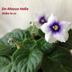 Dn-Магия Неба