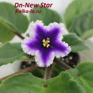 Dn-New Star
