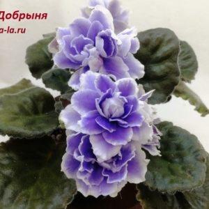 KZ-Добрыня