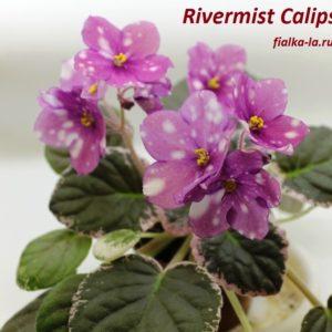 Rivermist Calypso