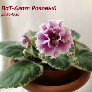 ВаТ-Агат Розовый