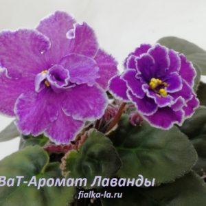 ВаТ-Аромат Лаванды