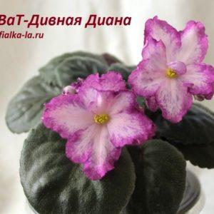 ВаТ-Дивная Диана