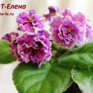 ВаТ-Елена