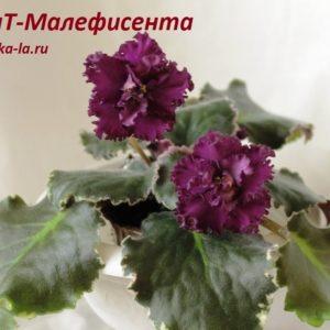 ВаТ-Малефисента
