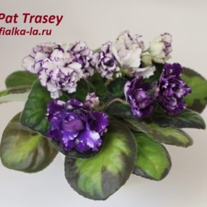 Pat Trasey
