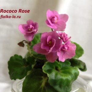 Roco Rose