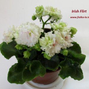 Irish Flirt