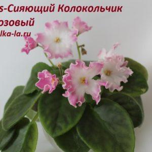 DS-Сияющий Колокольчик розовый (Еникеева)