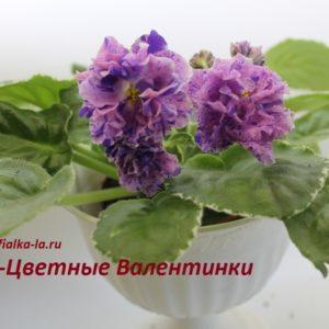 Dn-Цветные Валентинки (Д.Денисенко)