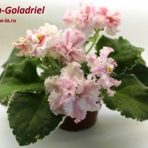Dn-Galadriel (Д.Денисенко)
