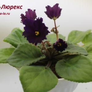 Ds-Люрекс (Еникеев)