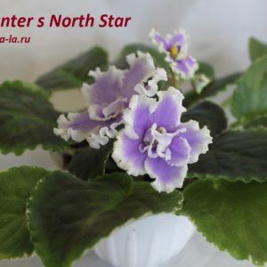 Hunter s North Star