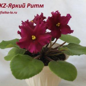 KZ-Яркий Ритм (Заикина)