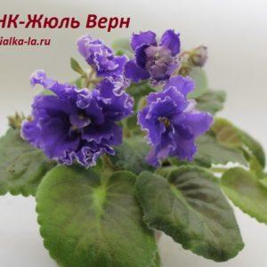 НК-Жюль Верен (Н.Козак)